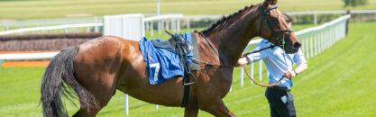 National Progression Award in Thoroughbred Preparation